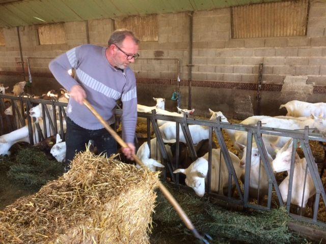 """Jean-Claude Fréval fabrique la """"couronne lochoise"""", un fromage de son invention avec le lait de ses chèvres"""