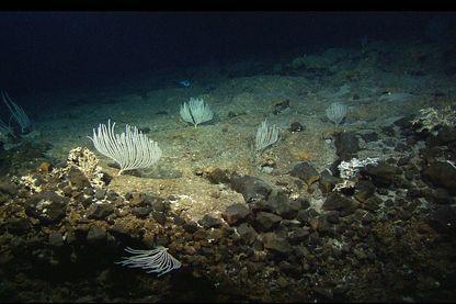 La massif Atlantis d'où proviennent les roches étudiées