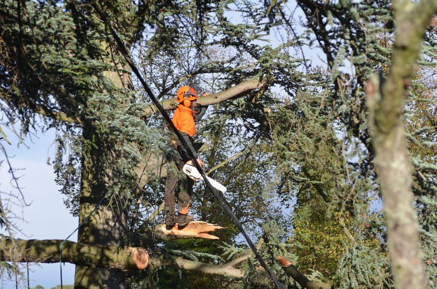 Avant de reposer les câbles arrachés, il faut déjà nettoyer les arbres