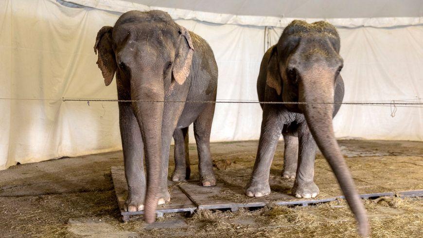 Elephantes d'un cirque