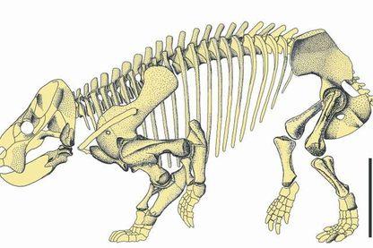 Reconstitution du squelette de « Lisowicia bojani ».