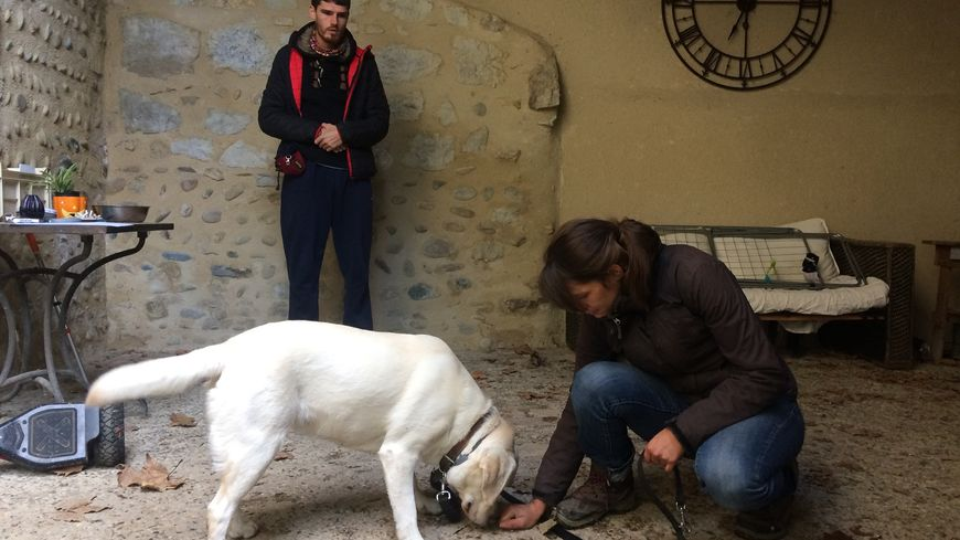 Les éducateurs canins vérifient d'abord que les chiens sont capables de vivre avec un enfant avant de lui apprendre à détecter la glycémie.