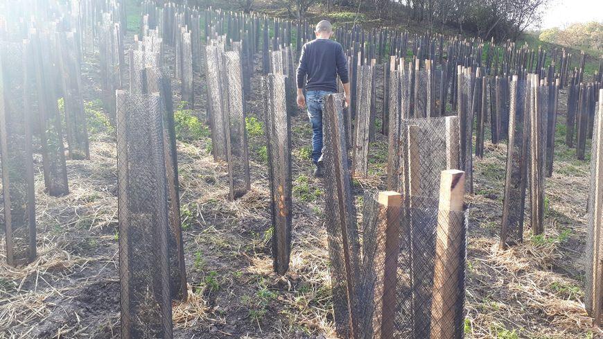 Une forêt comme il y a 13 000 ans, 5 000 arbres sont déjà plantés au Garric dans le Tarn