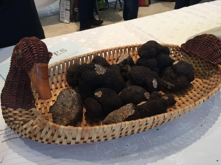 Déjà de belles truffes pour ce premier marché à Sainte Alvère