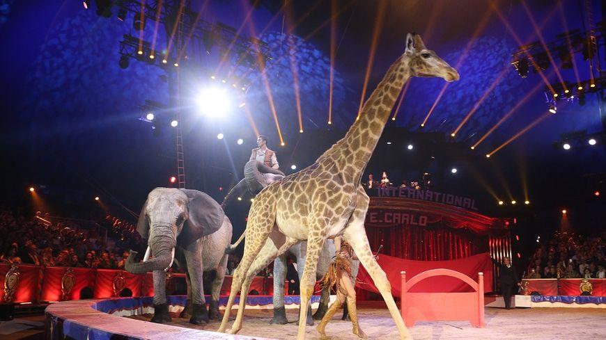 Un spectacle du Festival international du Cirque de Monte-Carlo, en janvier dernier.
