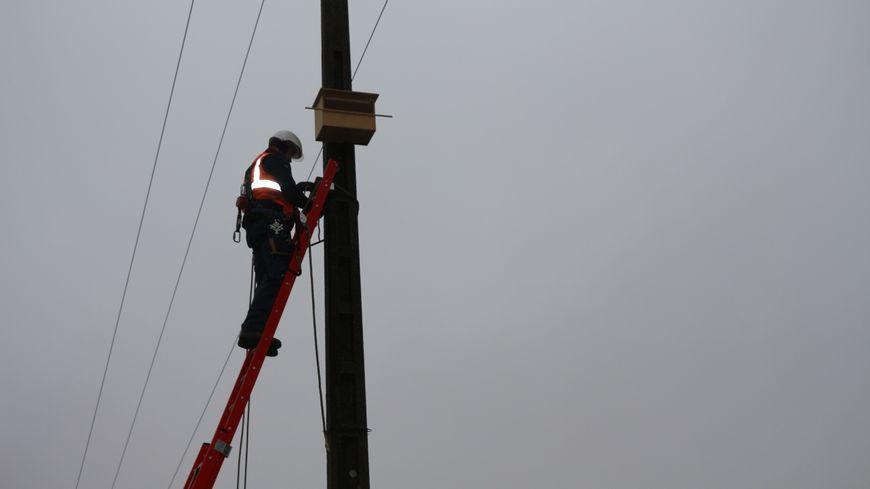 Des techniciens d'Enedis utilisent les moyens techniques de l'entreprise pour installer le nid