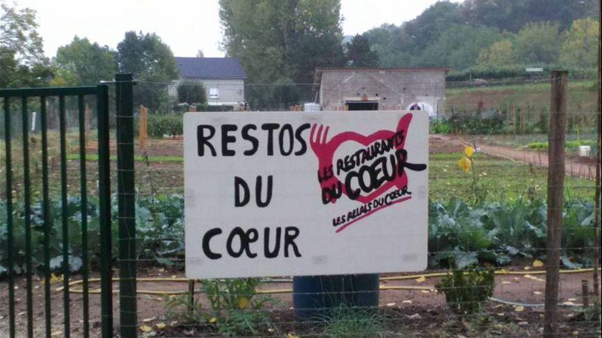 Les jardins de proximité fournissent des légumes frais aux centres de distribution des Restos