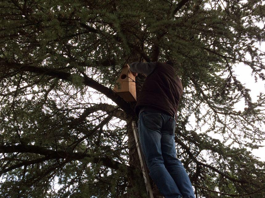 Des nichoirs en bois sont installés dans des grands arbres de la propriété. Ils ont été acheté sur le site de la LPO, lpo.fr.