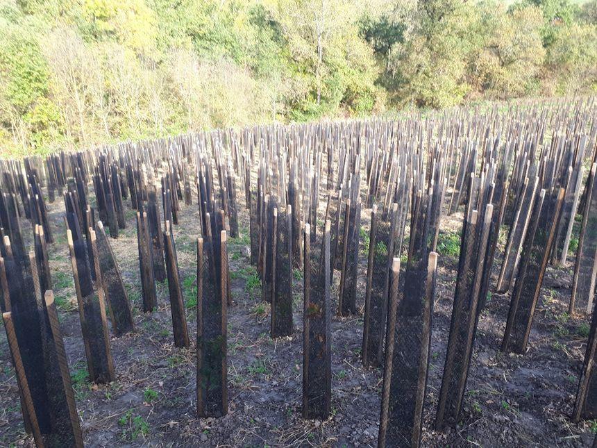 5 000 arbres et 30 espèces différentes sur 1 hectare