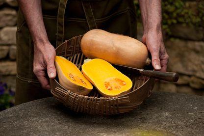 Un jardinier présente un panier contenant des courges butternut