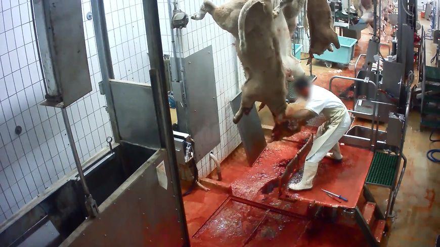Dans cette vidéo, l'association dénonce les conditions d'abattages des animaux.