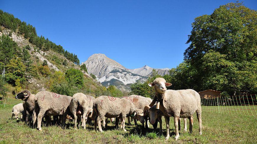 Le pastoralisme, un enjeu d'avenir pour la Corse