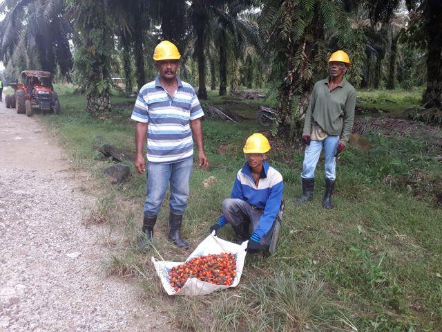 Sur la plantation, les ouvriers sont payés autour de 6 euros par jour.