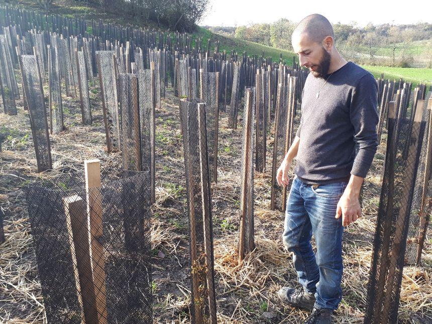 Cette forêt primaire poussera toute seule d'ici 3 ans