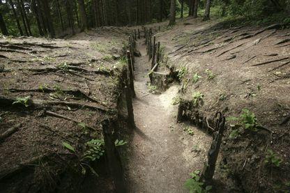 Séquelles de la Première Guerre mondiale dans la forêt de Verdun, près du Fort de Douaumont (restes de tranchées).