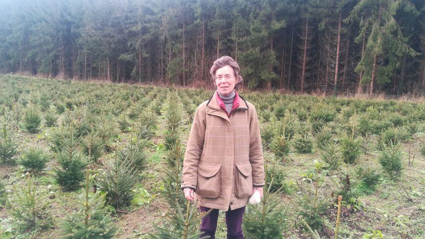 Bénédicte Leclerc de Hauteclocque, la petite-fille du maréchal Leclerc, cultive des sapins sur le domaine du château familial à Tailly-l'Arbre-à-Mouches dans la Somme