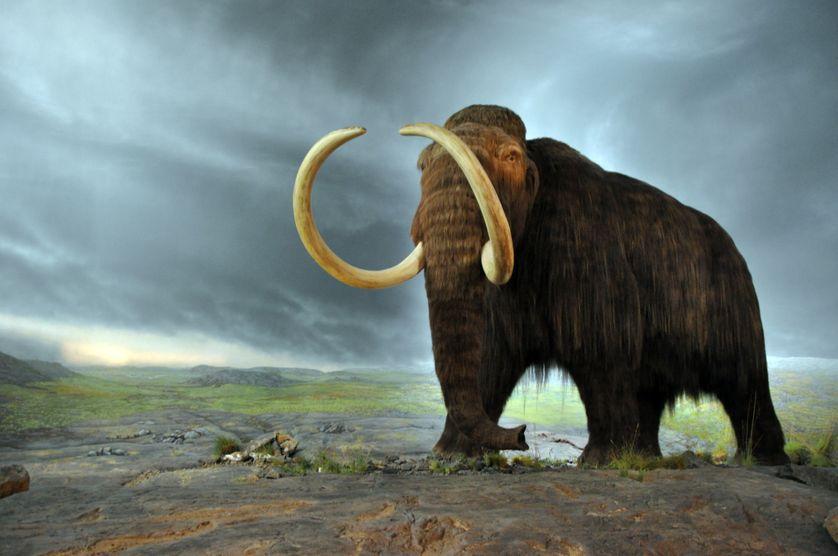 Pourrait-on un jour revoir une espèce disparue comme le Mammouth laineux ?