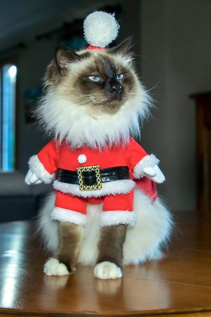 Le pull ou la tenue de Père Noël... à la mode cette année pour les animaux
