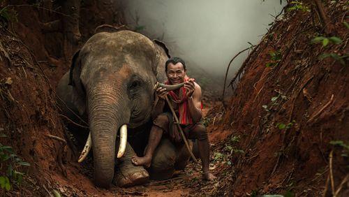Savanes, forêts, villes : partager son territoire