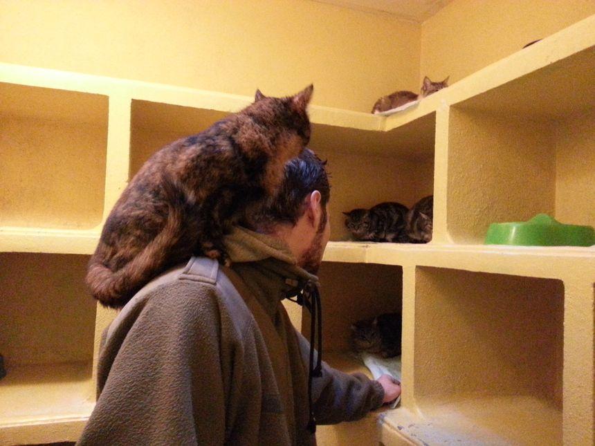 Un bénévole de la SPA de Saint Etienne entouré de chats
