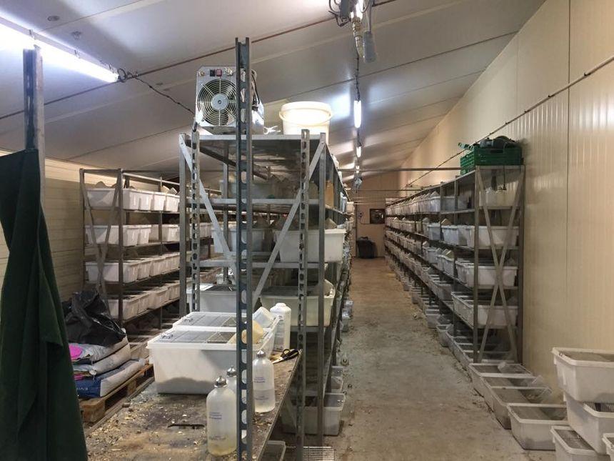 Près de 900 cages sont contenues dans un seul hangar certaines sont surpeuplées.