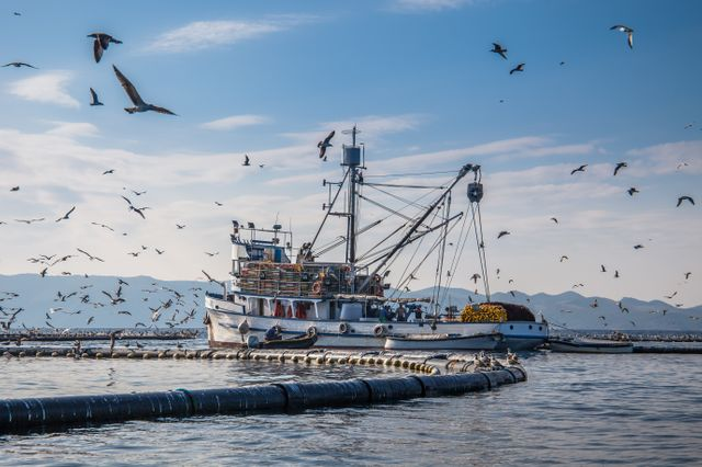 Bateau de pêche en Croatie