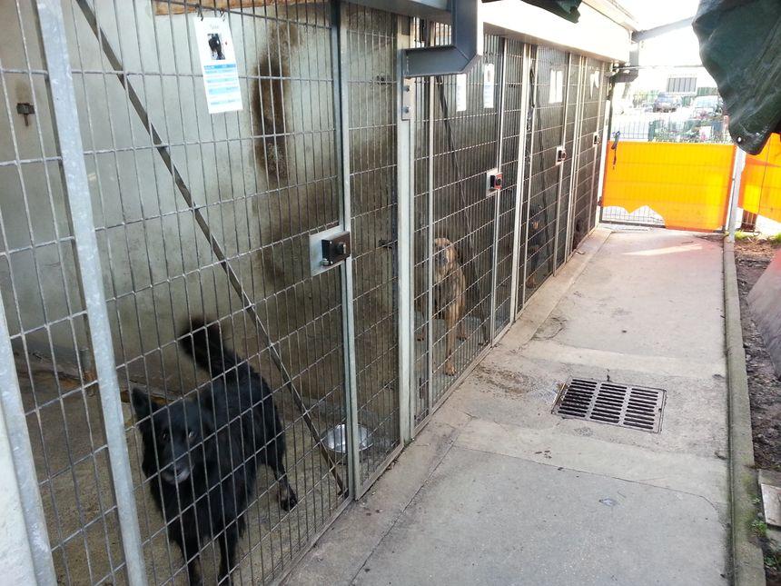 Les boxes des chiens à la SPA de Saint Etienne