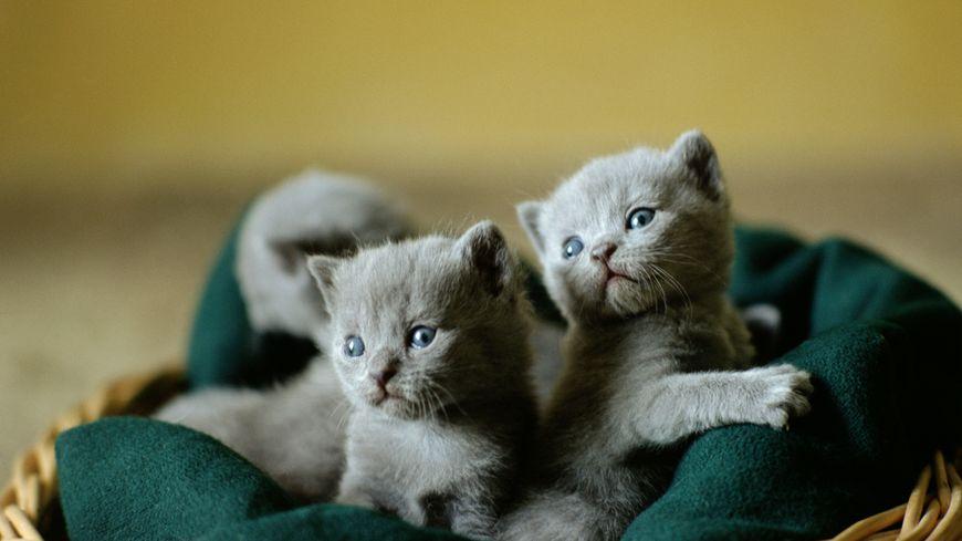 La vente de chiots et de chatons sera interdite en animalerie dès l'an prochain en Grande-Bretagne