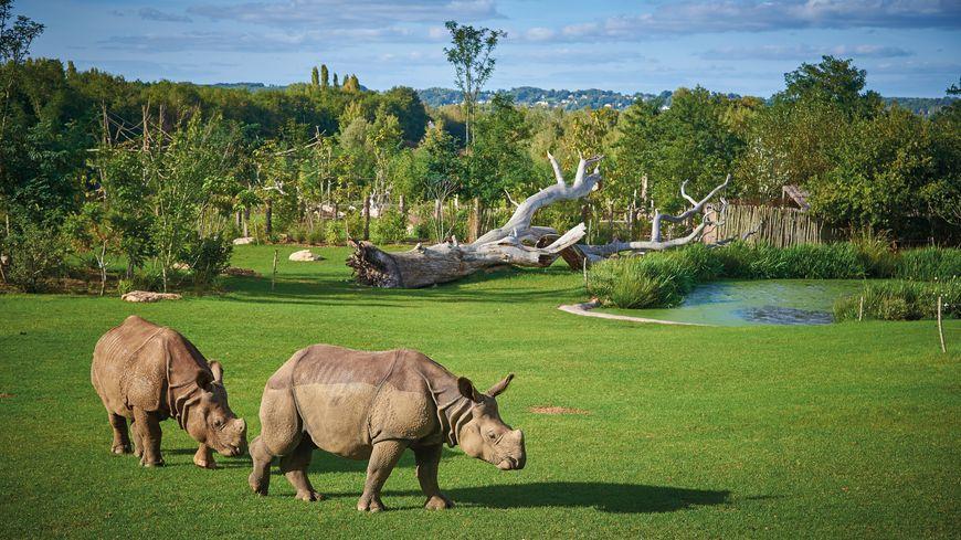 Depuis 2017, la plaine asiatique du zoo de La Flèche s'étend sur quatre hectares