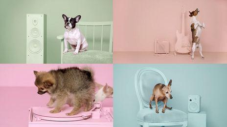 vive les chiens !!!