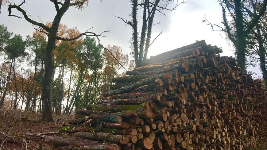 Sur 15 ans, 12,7 millions de m3 de bois ont été récoltés et commercialisés en Périgord