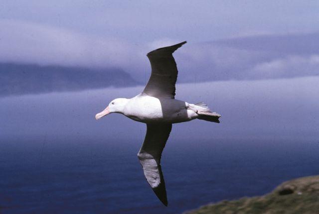 Les Albatros permettent de localiser les bateaux illégaux