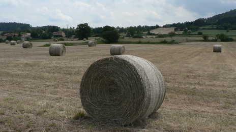 En raison de la sécheresse, de nombreux éleveurs ont du puiser très rapidement dans les stocks de fourrage bien avant l'hiver