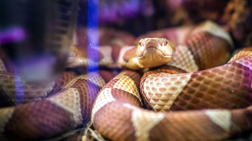 Le SDIS du Territoire de Belfort a été alerté après la découverte d'un serpent dans un jardin de Valdoie (Photo d'illustration)