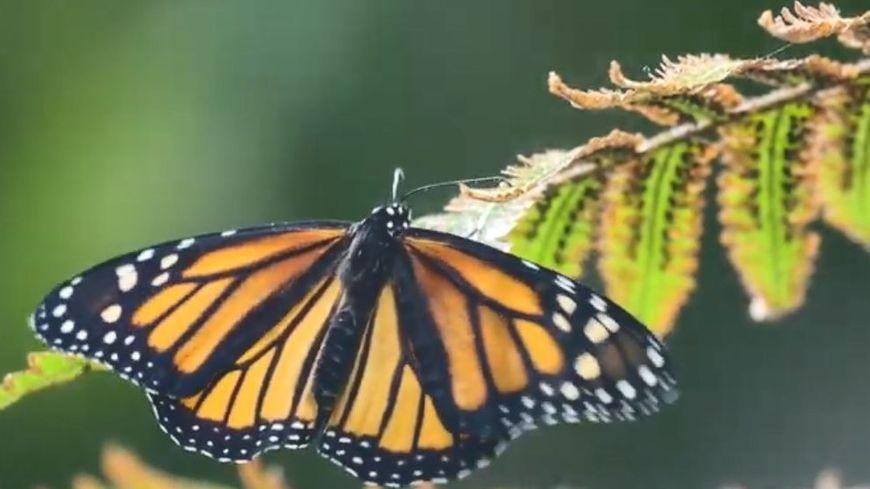 Les papillons seront visibles dans le pavillon tropical.