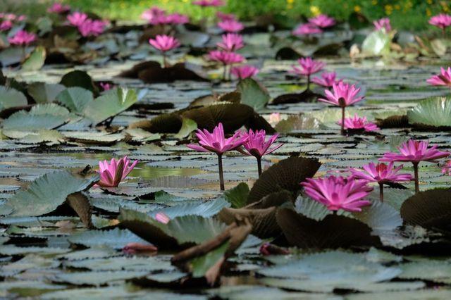 L'Institut Terra a contribué à accroître la biodiversité