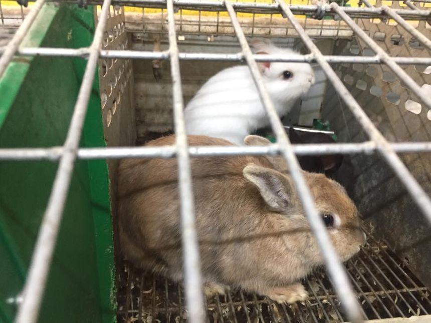 Les animaux seront soignés puis envoyés dans des foyers dans toute la France.