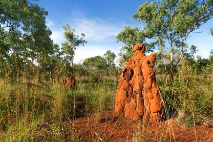Termitière dans le Parc national de Nitmiluk, Territoire du Nord, Australie