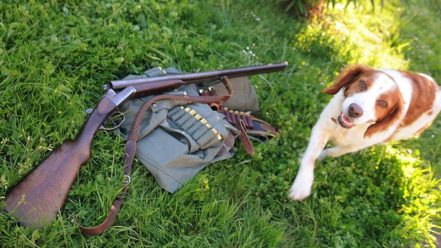 Le chasseur du chien percuté par une auto est en garde à vue pour avoir fait usage de son arme sous l'emprise de l'alcool (photo d'illustration).