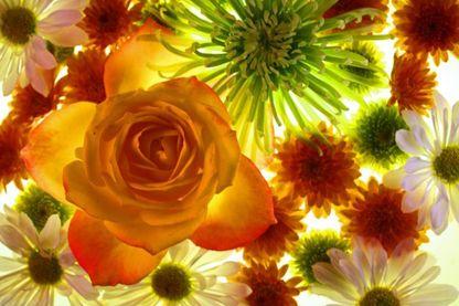 Des fleurs de saison toute l'année sans pesticide