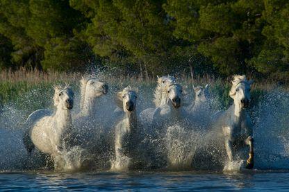 Des chevaux spécialement choisis pour leurs capacités  au secours des personnes lourdement paralysées