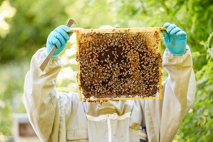Des abeilles employées à contrôler notre environnement.