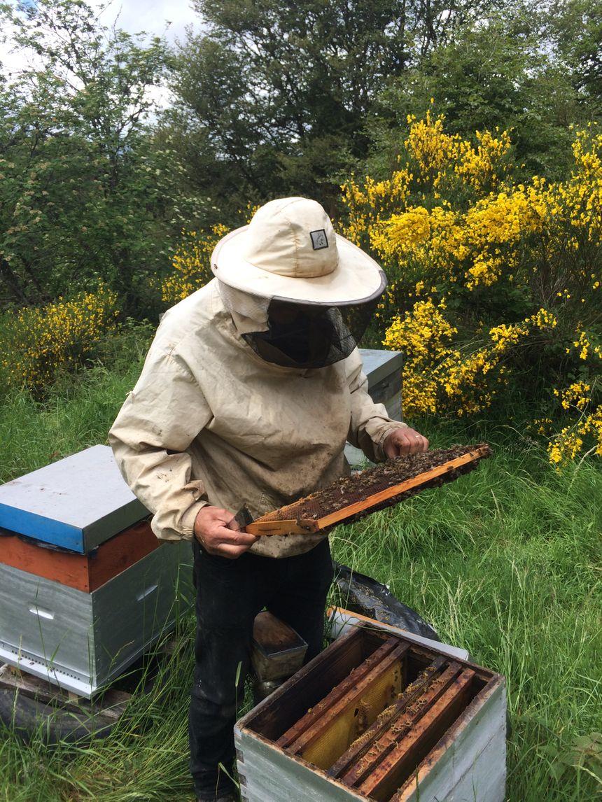 Aujourd'hui, le département, malgré les contraintes liées à notre territoire, recense plusieurs centaines d'apiculteurs qui possèdent deux ou trois ruches