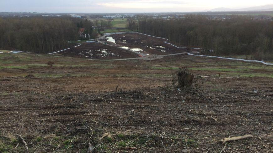 L'ancienne forêt de Kolbsheim sur laquelle était implantée la ZAD