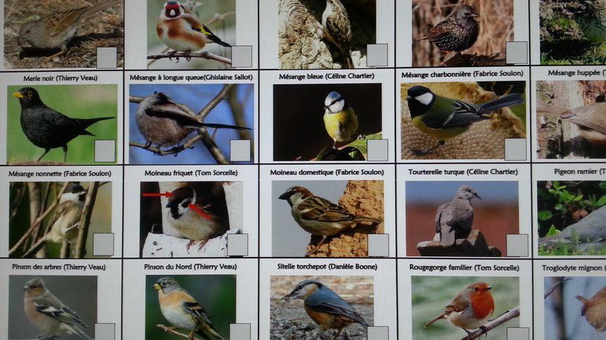 Une fiche vous permet de reconnaître plus facilement les oiseaux que vous pourriez observer.