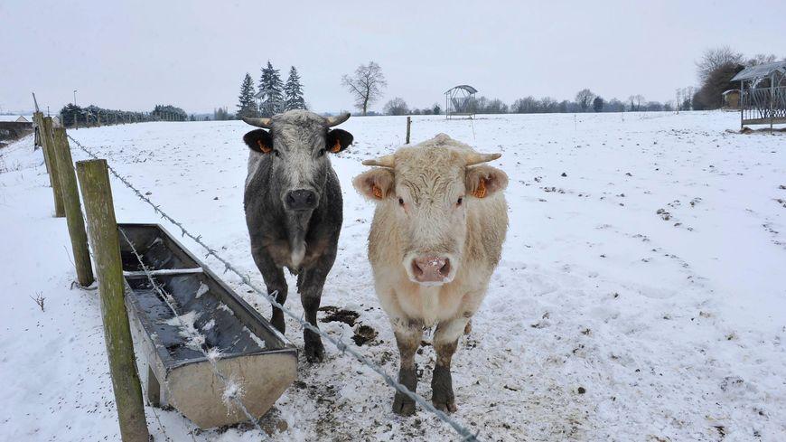 Selon Météo France, il pourrait tomber entre 3 et 10 centimètres de neige en Mayenne ce mardi.