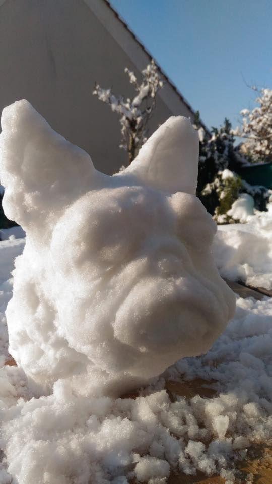 Un joli bouledogue des neiges par Pascale