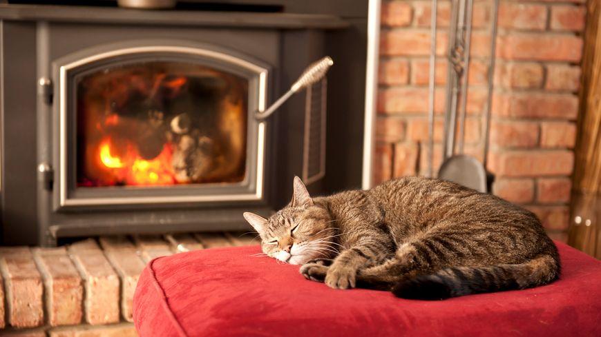 Un bon feu, c'est réconfortant l'hiver. Mais peut-on recycler les cendres au jardin?