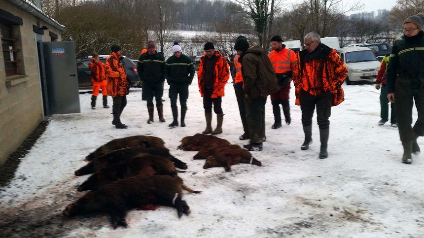 19 sangliers ont été tués au cours de cette première battue anti-peste-porcine africaine