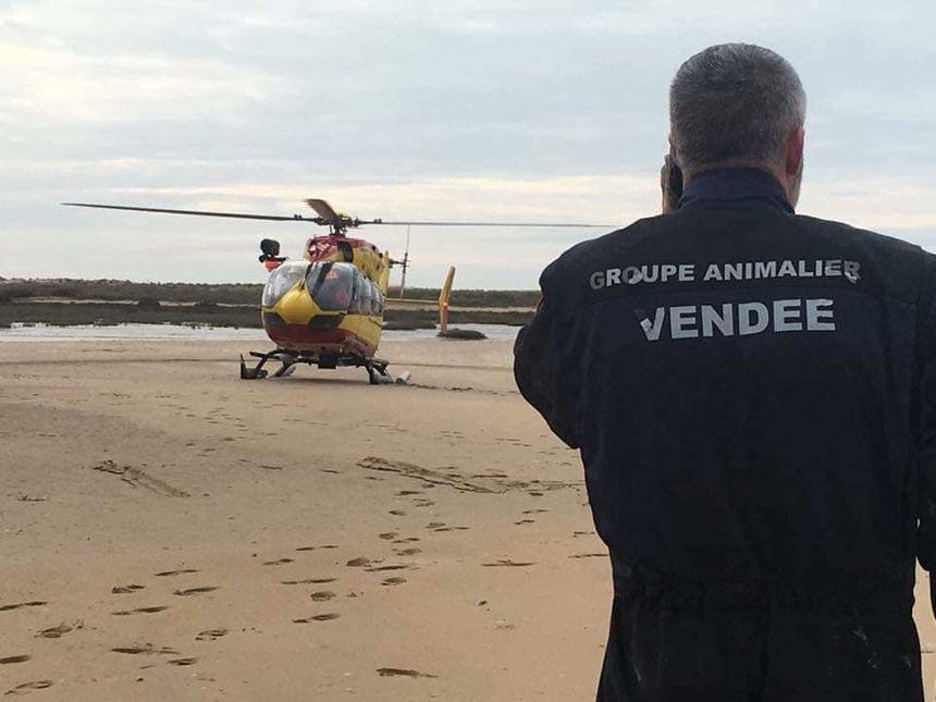 L'hélicoptère Dragon 17 de la sécurité civile est venu aider au sauvetage.